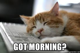 Sleepy Cat Meme - got morning sleepy cat meme generator