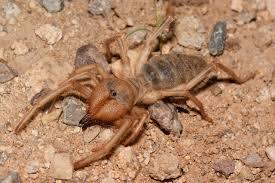 Georgia wildlife images Wind scorpion discovered in georgia georgia wildlife resources jpg