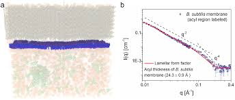 the in vivo structure of biological membranes and evidence for