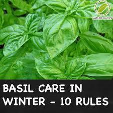 Herb Garden Winter - 561 best growing herbs images on pinterest gardening herb