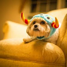 Dog Halloween Party Ideas How To Stop Your Dog From Barking At The Doorbell Rover Com