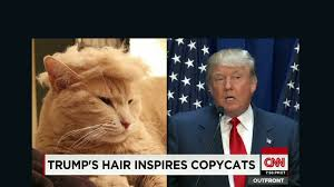Your Crazy Meme - trump cats feature felines with crazy hairlines cnn video