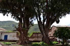 cool trees exploring cusco u2013 the southern valley u2013 cheddar jack