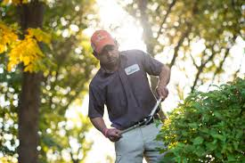 Landscaping Companies Kansas City by Kansas City Lawn Services