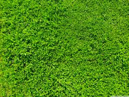 green wallpaper home decor green grass wallpapers backgrounds with quality hd beautiful nature