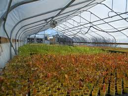 native plant nursery news