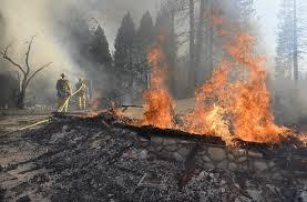 Wildfire Weed by Sierra Fire Cause Man Burning Deer Innards Sfgate