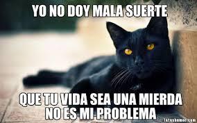 imagenes groseras de gatos gatos con frases groseras imagui