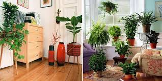 plants indoors collect all benefits from indoor plants