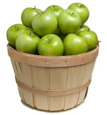willis orchard company southern apple trees standard apple