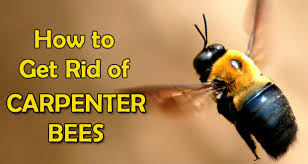 How To Kill Ants In The Kitchen by How To Get Rid Of Flying Ants In House