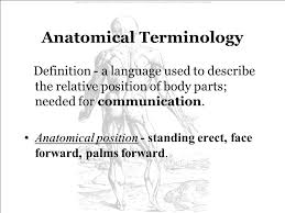 Human Anatomy Terminology Introduction To Human Anatomy U0026 Physiology Ppt Video Online Download