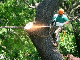 your bonita springs estero and naples tree trimming and tree