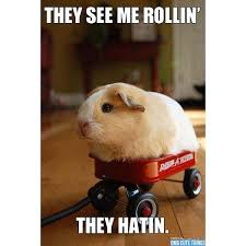 They See Me Rollin Meme - they see me rollin guinea pig meme see best of the funny meme