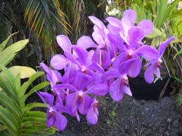 orchid plants types of orchids