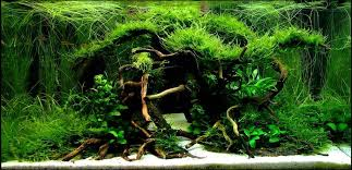 Aquascape Design Layout Aquarium Driftwood Manzanita Wood Sumatra Wood Redmoor Wood