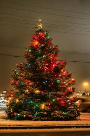 Outdoor Christmas Trees by 765 Best Christmas Trees Images On Pinterest Christmas Time