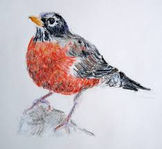 robins draw a bird day method two madness