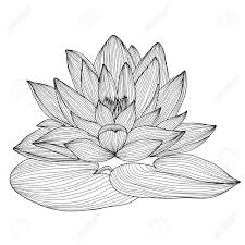 elegant decorative lotus flower design element floral branch