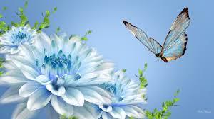 b white b b blue b lotus and butterflies b flower b