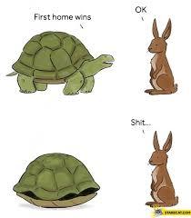 Turtle Memes - turtle memes starecat com