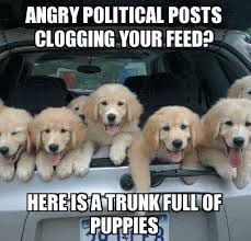 Funny Angry Memes - angry political posts clogging your feed here are some puppies