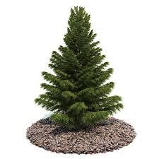 3d model small pine tree cgtrader