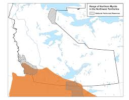 Northern Canada Map by Northern Myotis Nwt Species At Risk