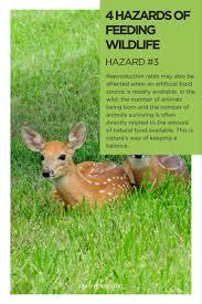147 best virginia wildlife images on pinterest virginia