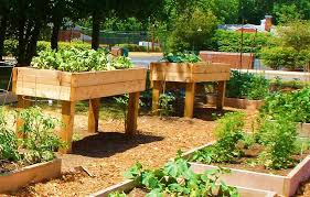 raised garden bed design gardening guide