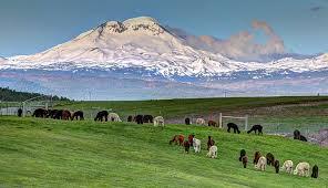country estates alpaca business profile