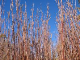plants native to kansas native plants as habitat archives dyck arboretum