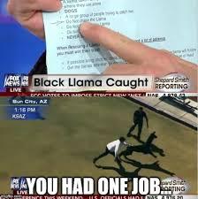 Arizona Memes - i said don t chase it damit 2015 arizona llama chase