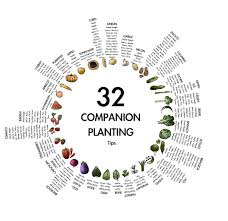 Companion Gardening Layout Vegetable Garden Layout Companion Planting The Garden Inspirations