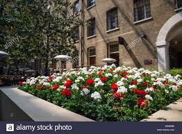 flowerbed of white and red carnation flowers devonshire square sq