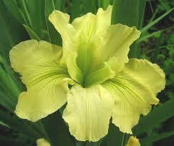 louisiana native plant society home