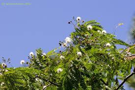 florida native plants irc natives for your neighborhood