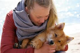 australian shepherd quiz quiz which dog breed is right for me dog breeder