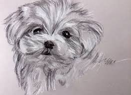 how to draw a puppy with charcoal and carbon pencil youtube