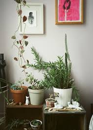 607 best indoor jungle images on pinterest plants houseplants