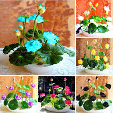 hydroponic indoor gardening promotion shop for promotional