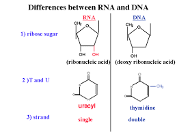 rna ck 12 foundation