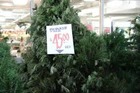 the ultimate christmas tree buying u0026 care guide the krazy coupon