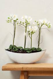 artificial orchids artificial flowers plants artificial bouquets next uk