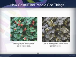 Yellow Red Color Blindness Prevalence Of Red Green Color Vision Defects