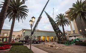 arrival of 90 foot tree marks start of