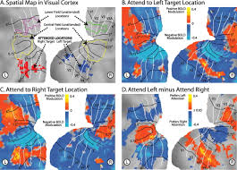 asymmetry of anticipatory activity in visual cortex predicts the