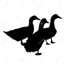 three silhouette of beautiful ducks vector illustration royalty