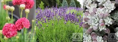 drought tolerant plants willowbrook nurseries