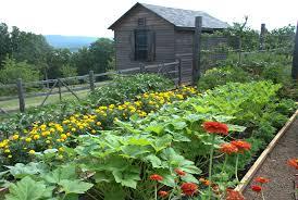 vegetable garden fertilizer organic for saving your environment